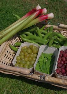 producten uit de tuin plukken bij Sprankenhof