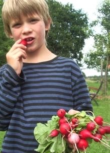 jongen eet biologisch radijs met in zijn hand bosje radijsjes zelf geplukt bij Sprankenhof