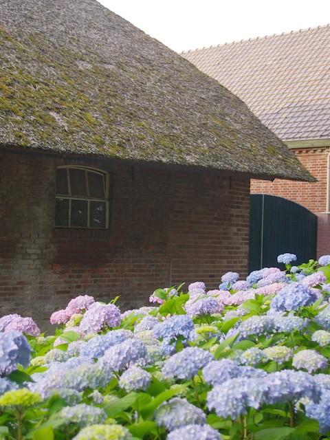 Boshoeve Sprankenhof