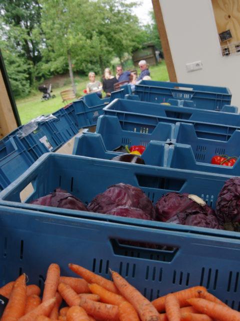 Rek met verschillende biologische groentes in Udenhout