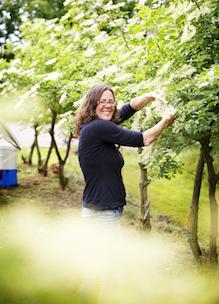 Joset Vermeer knipt biologische vlierbloesem producten Sprankenhof Udenhout