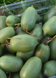 pluktips kiwibessen | met de hand of een schaartje