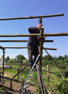 Vrijwilligers creatief handig bouwen een bijenstal bij Sprankenhof Udenhout vacatures