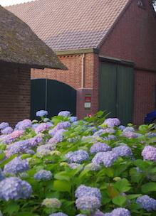 Boshoeve Sprankenhof het gebouw is de biologische boerderij