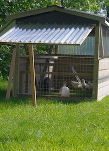 Mobiele kippenhokken reist door de tuin bij Sprankenhof in Udenhout