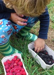 kindje eet uit bakje biologisch fruit vers uit de tuin van Sprankenhof