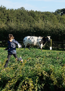 Kindje in aardbeienveld met op de achtergrond koe