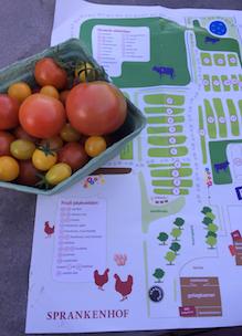 Plattegrond biologische tuin boerderij Sprankenhof zelf fruit en groente oogsten