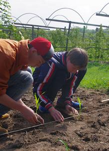 Twee jongens helpen de boer mee met planten tijdens educatief programma scholen op Sprankenhof Udenhout