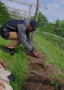 jongen helpt de boer mee met planten tijdens educatief programma scholen op Sprankenhof Udenhout